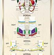 AAR foot chart